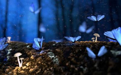 Meditazione: MEDITANTE… O MEDITABONDO?!