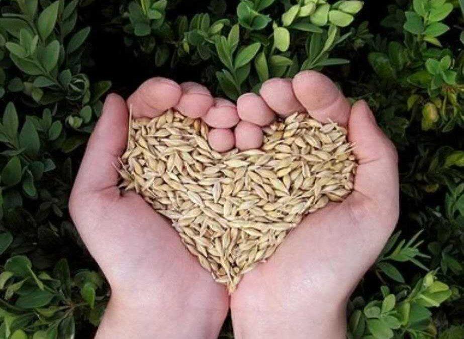 SeminiAMO: 5 semi di salute per vivere con gioia e libertà lo spazio del nostro corpo
